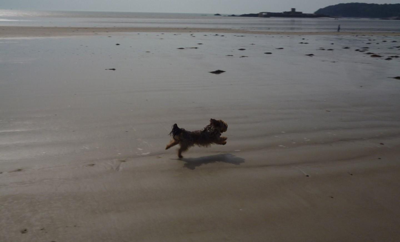 Cassie the Blog Dog