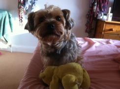 Pudsey my favourite toy
